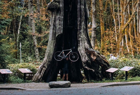 landyachtz-bikes-ride-for-the-forest-2020-biggest-tree